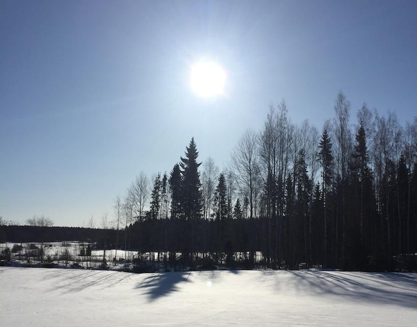 Aurinkoinen, talvinen peltomaisema